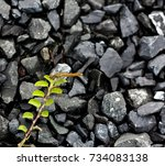 A Branch Of Small Plants On Th...