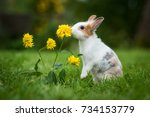 Stock photo little rabbit smelling a flower in the garden 734153779