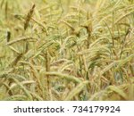 Small photo of macro photo of natural ornamental against the grain of a crop as the source for design, advertising, prints, posters, decor
