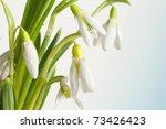 snowdrop   Shutterstock . vector #73426423