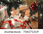 Stock photo kitten peeking behind the christmas tree 734271319