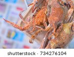 Small photo of Hot flower crab or blue crab blue ready to eat. Selective focus