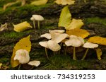 Group Of Small Inedible...