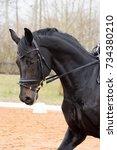 portrait of dressage horse in... | Shutterstock . vector #734380210