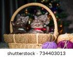 little kittens under a... | Shutterstock . vector #734403013
