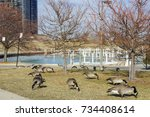 Many Canada Geese With Chicago...