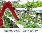 agriculture vertical farming... | Shutterstock . vector #734412019
