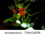 red berries  | Shutterstock . vector #734413039