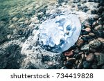 large jellyfish lies in water... | Shutterstock . vector #734419828