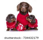 Stock photo puppy dachshund new year s puppy christmas dog 734432179