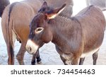 donkey close up  | Shutterstock . vector #734454463