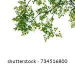 green leaf and branches on... | Shutterstock . vector #734516800