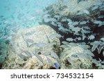 flock of tropical fish seen... | Shutterstock . vector #734532154