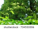 plants | Shutterstock . vector #734533306