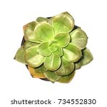 picture above plants green trees | Shutterstock . vector #734552830