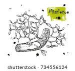 mistletoe european or common... | Shutterstock .eps vector #734556124