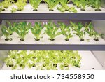 modern agricultural plant... | Shutterstock . vector #734558950