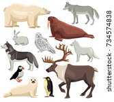 different flat polar animals... | Shutterstock . vector #734574838