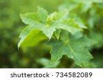 water droplets on green leaf | Shutterstock . vector #734582089