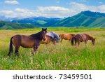 The Herd Of Horses Is Grazed O...