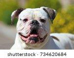 portrait of stocky  strong... | Shutterstock . vector #734620684
