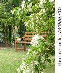 bougainvillea bush on the lawn  ... | Shutterstock . vector #734666710