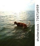 the dog walks into the sea.... | Shutterstock . vector #734714959