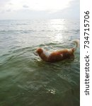 the dog walks into the sea.... | Shutterstock . vector #734715706