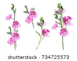 photo small pink flowers on a... | Shutterstock . vector #734725573