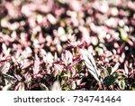 red leaves in the garden ... | Shutterstock . vector #734741464