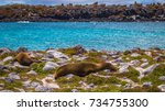 sealions in plaza sur island ... | Shutterstock . vector #734755300