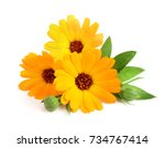 Stock photo calendula marigold flower with leaf isolated on white background 734767414