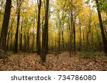 natural wild deciduous forest... | Shutterstock . vector #734786080