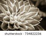 Details Of Dahlia Fresh Flower...