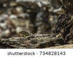 lizard   Shutterstock . vector #734828143