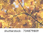 autumn. fall scene. beauty... | Shutterstock . vector #734879809