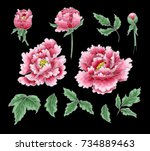 set of elements of peony flower ... | Shutterstock .eps vector #734889463