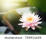 beautiful lotus flower  lily... | Shutterstock . vector #734911654