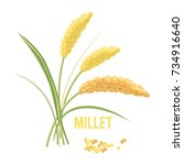yellow millet isolated on white ... | Shutterstock .eps vector #734916640