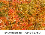 beautiful autumn background... | Shutterstock . vector #734941750