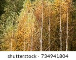 natural wild deciduous forest... | Shutterstock . vector #734941804