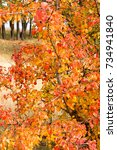 beautiful autumn background... | Shutterstock . vector #734941840