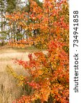 beautiful autumn background... | Shutterstock . vector #734941858