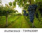 grape harvest  | Shutterstock . vector #734963089