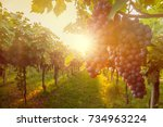 grape harvest  | Shutterstock . vector #734963224