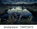 mysterious night forest with...   Shutterstock . vector #734972674