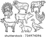 farm animal set. fresh organic... | Shutterstock .eps vector #734974096
