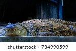 the nile crocodile  crocodylus... | Shutterstock . vector #734990599