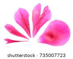 Stock photo pink petals of peony close up isolated on white conceptual volume scale 735007723
