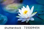 white lotus with yellow pollen... | Shutterstock . vector #735009454